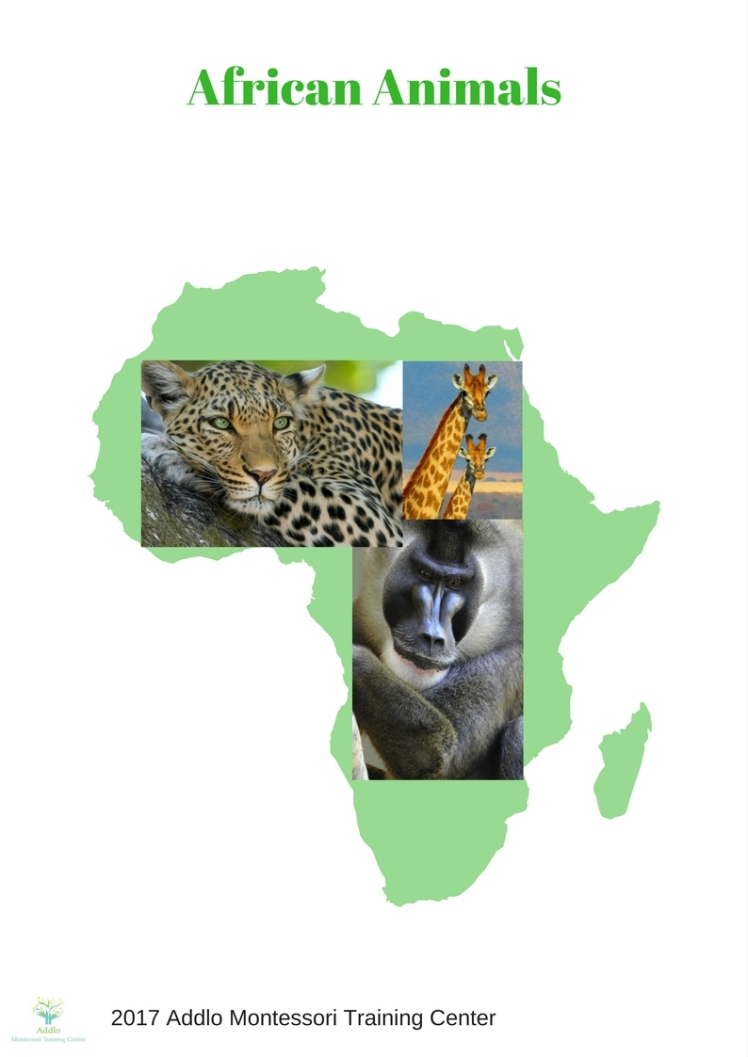 Copy of Animals of Africa