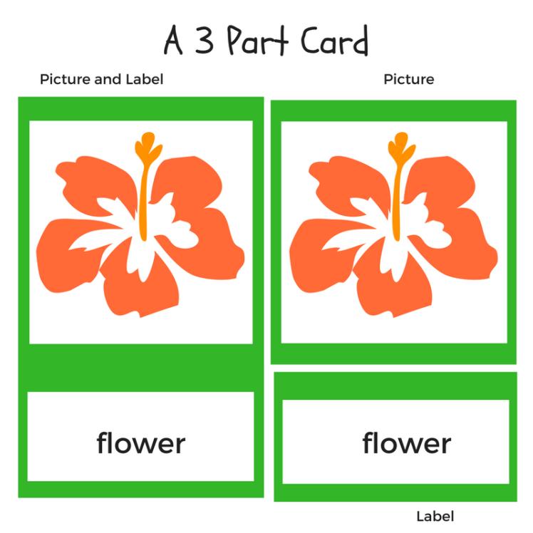 flower 3p